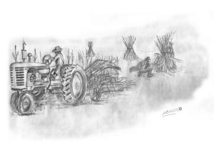 sk-12-shocking-corn